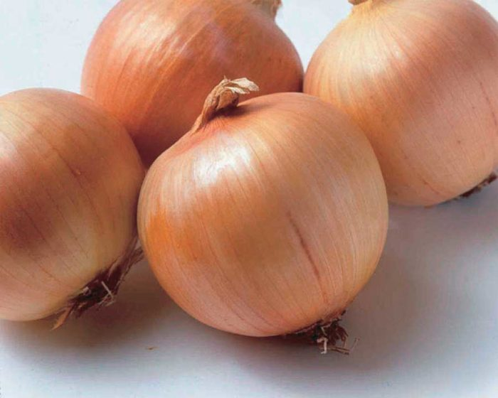 Onion Genisis Hyb - Qty. msd