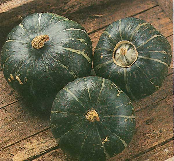 Squash Burgess Buttercup - Qty. 25sds