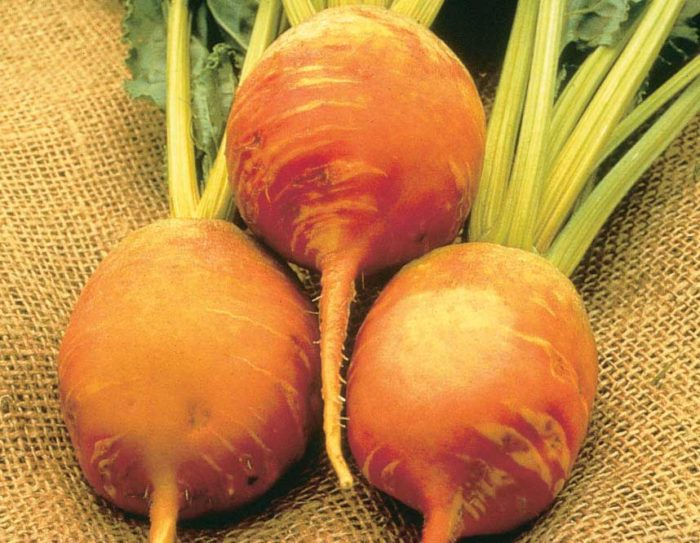 Beet Detroit Yellow - Qty. lbs